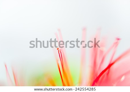Pohutukawa abstract against white background, blurry effect. - stock photo