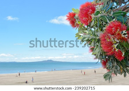 Pohutukawa red flowers blossom in the month of December in the North shore of Auckland, New Zealand. copy space - stock photo