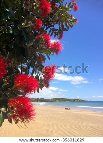 Pohutukawa red flowers blossom on the month of December over a sandy beach with a small fishing boat doubtless bay New Zealand. - stock photo