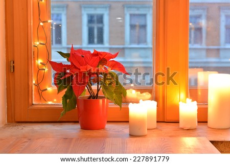 Poinsettia and candles on the windowsill - stock photo