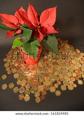 Poinsettia and Christmas money A nice poinsettia and lots of Christmas money.  - stock photo