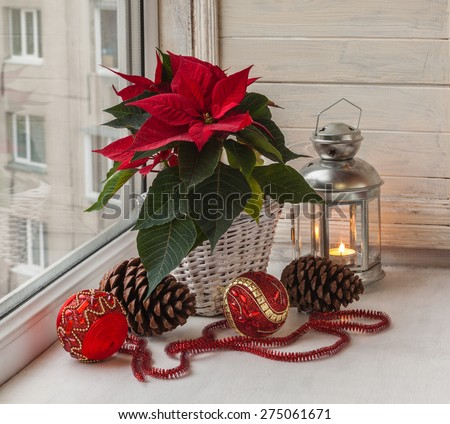 Poinsettia  (Euphorbia pulcherrima), Christmas decorations and lights in the window on the eve of Advent - stock photo