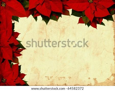 Poinsettia textured - stock photo