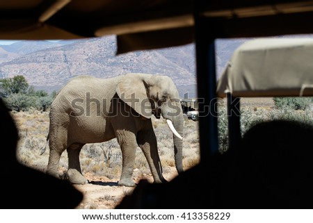 point of view from safari vehicle looking at an elephant in a game reserve in South Africa - stock photo