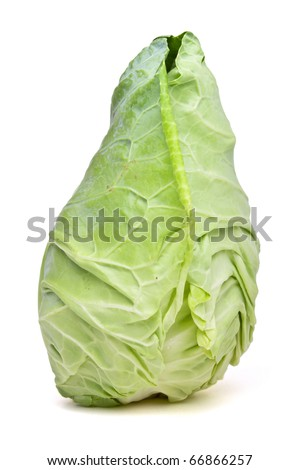 Pointed Sweetheart Cabbage from low perspective isolated on white.
