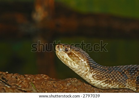 Poisonous snake in the wild