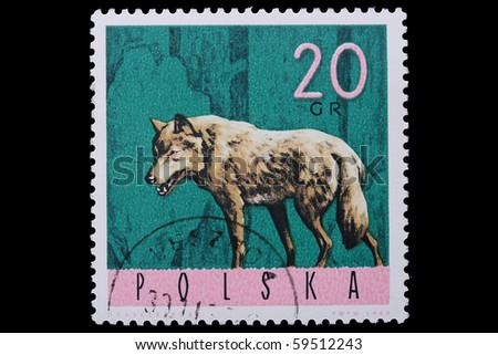 POLAND - CIRCA 1965: A stamp is printed in Poland, wolf, let out CIRCA in 1965.
