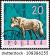 "POLAND - CIRCA 1965: A stamp printed in Poland from the ""Forest Animals"" issue shows a wolf, circa 1965. - stock photo"
