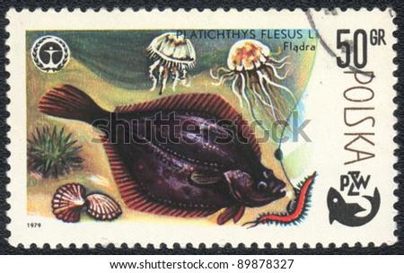 "POLAND - CIRCA 1979: A Stamp printed in POLAND shows a European flounder (Platichthys flesus),  series ""Fishing"", circa 1979 - stock photo"