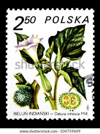 """POLAND - CIRCA 1980: A stamp printed in POLAND shows a Moonflower with the inscription """"Datura inoxia"""", from the series """"Medicinal Plants"""", circa 1980 - stock photo"""
