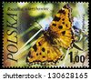 "POLAND - CIRCA 1977: A stamp printed in Poland shows butterfly Numphalis polychloros, with the same inscription, from the series ""Butterflies"", circa 1977. - stock photo"