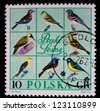 POLAND - CIRCA 1966: A stamp printed in Poland shows different kinds and colors of birds,circa 1966 - stock photo