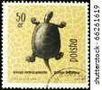 POLAND - CIRCA 1963: A stamp printed in Poland shows European pond turtle, series devoted to reptiles and amphibians, circa 1963 - stock photo