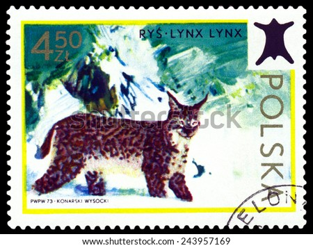 POLAND - CIRCA 1973: A Stamp printed in Poland shows image  Lynx.,  series, circa 1973  - stock photo