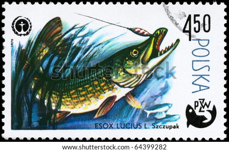 """POLAND - CIRCA 1979: A Stamp printed in POLAND shows image of a Pike with the description """"Esox lucius"""" from the series """"Fish and Environmental Protection Emblem"""", circa 1979 - stock photo"""