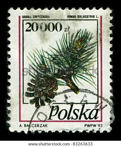 POLAND-CIRCA 1993:A stamp printed in POLAND shows image of Pinus sylvestris, commonly known as the Scots Pine, is a species of pine native to Europe and Asia, ranging from Scotland,  circa 1993.