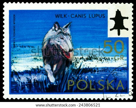 POLAND - CIRCA 1973: A Stamp printed in Poland shows image  Wolf Canis Lupus,  series, circa 1973  - stock photo