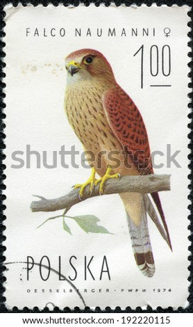 POLAND - CIRCA 1974: A stamp printed in POLAND shows Lesser Kestrel female (Falco naumanni), from series Falcons, circa 1974 - stock photo