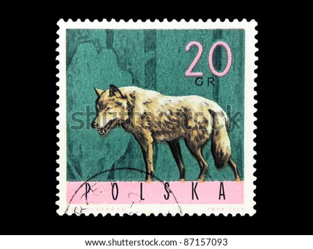 "POLAND - CIRCA 1965:: A stamp printed in Poland shows the image of a Wolf no inscription from the series ""Beasts of the forest"", circa 1965"