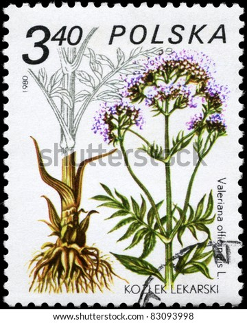 """POLAND - CIRCA 1980: A stamp printed in Poland shows the Valerian, with the description """"Valeriana officinalis"""", from the series """"Medicinal Plants"""", circa 1980 - stock photo"""