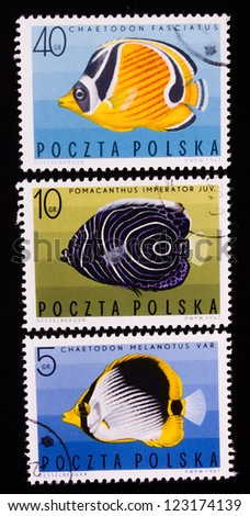 POLAND - CIRCA 1967: A stamp printed in Poland shows three different kind and color of sea fish,circa 1967 - stock photo