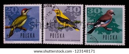 POLAND - CIRCA 1966: A stamp printed in Poland shows three kinds of wild birds,circa 1966 - stock photo