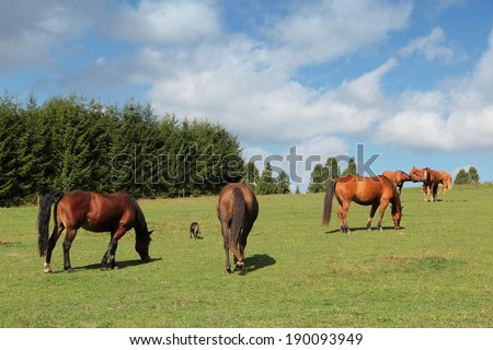 Poland - countryside in Bieszczady mountains. Mountain pasture with grazing horses.