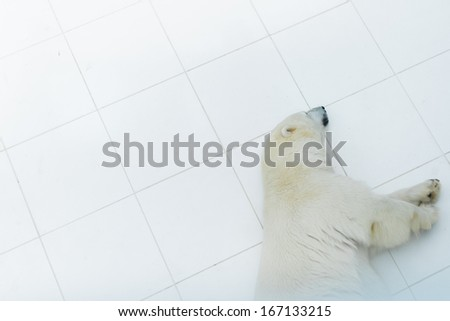 Polar Bear at a Zoo - stock photo