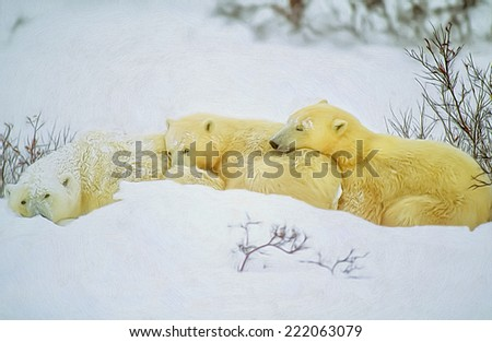 Polar bear family in day bed - stock photo