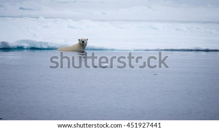 Polar bear in water by snow - stock photo