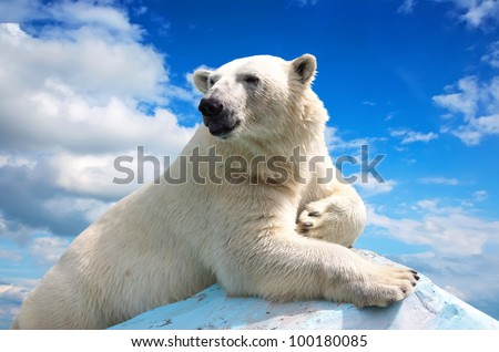 polar bear in wildness area against sky - stock photo