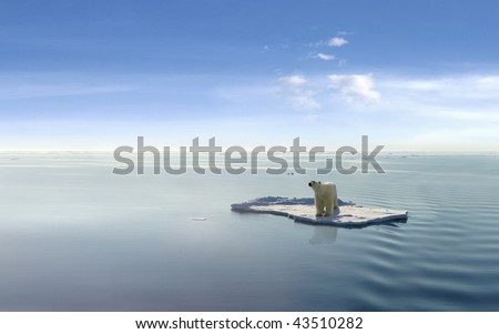 Polar bear on an ice floe - stock photo