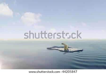 Polar bear on an ice floe - stock photo