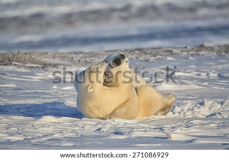 Polar bear play fight, digital oil painting - stock photo