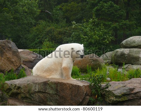 Polar bear resting on a rock at the zoo - stock photo