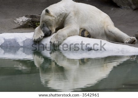 Polar Bear sleeping on edge of ice - stock photo