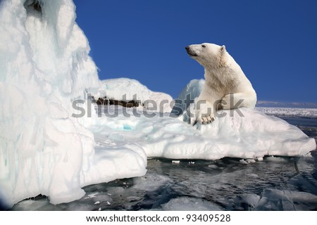 polar bear standing on the ice block - stock photo