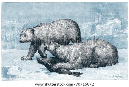 "Polar bear -vintage engraved illustration - ""Cent récits d'histoire naturelle"" by C.Delon published in 1889 France - stock photo"