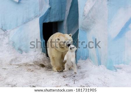 Polar bear with cub - stock photo