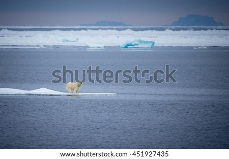 Polar Bears are running out of ice, their habitat - stock photo