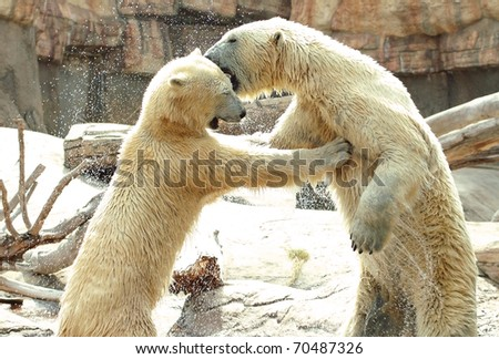 Polar Kiss - stock photo