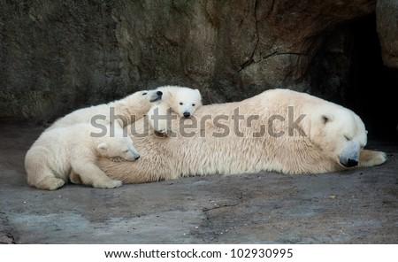 Polar she-bear having a rest with three small bear cubs - stock photo