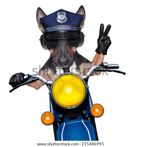 POlICE DOG ON DUTY driving a motorbike with victory peace fingers - stock photo
