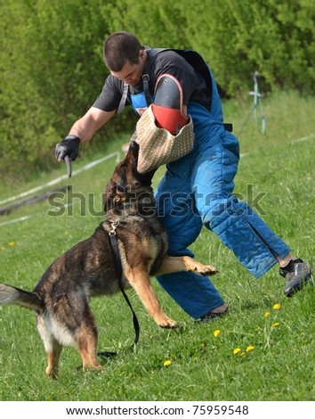 police dog trainnig - stock photo