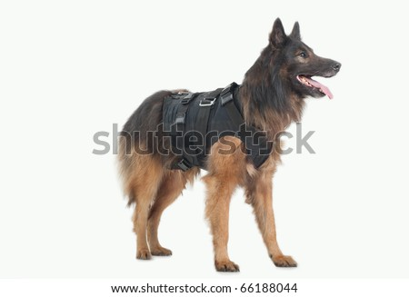 police dog with bulletproof - stock photo