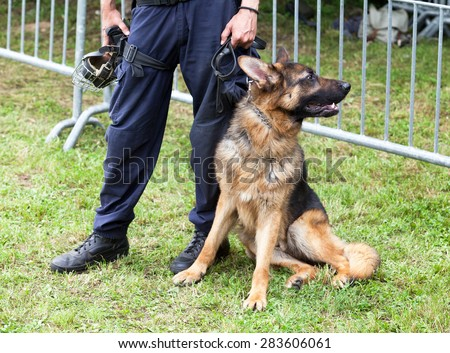 Police officer with the german shepherd police dog - stock photo