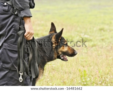 Policeman´s  champion dog in action - stock photo