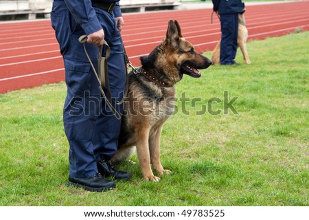 Policeman with a german shepherd on a training. - stock photo