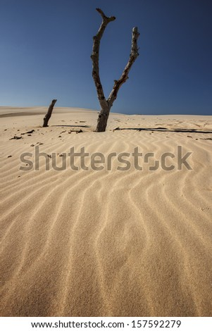 Polish famous dunes in Leba - National Park. / Polish Dunes - stock photo