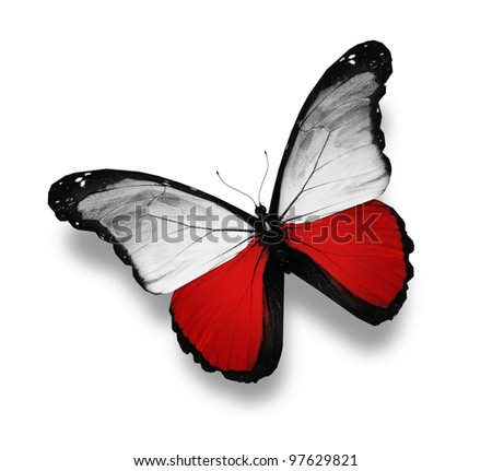 Polish flag butterfly, isolated on white - stock photo